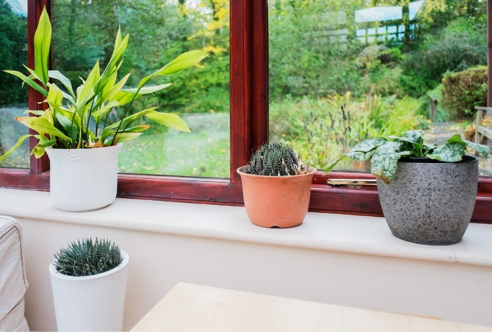 Breathe New Life into Your Conservatory - Conservatory Plants - Crownhill Conservatories